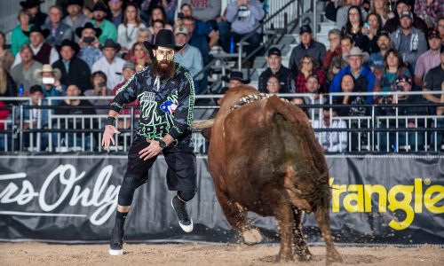 Wearing a face guard to protect the three facial fractures he suffered last week, Weston Rutkowski produced a solid bullfight Monday during the first of four FlexFit Preliminary Rounds at the Bullfighters Only Las Vegas Championship at the Tropicana Las Vegas. (PHOTO BY TODD BREWER)