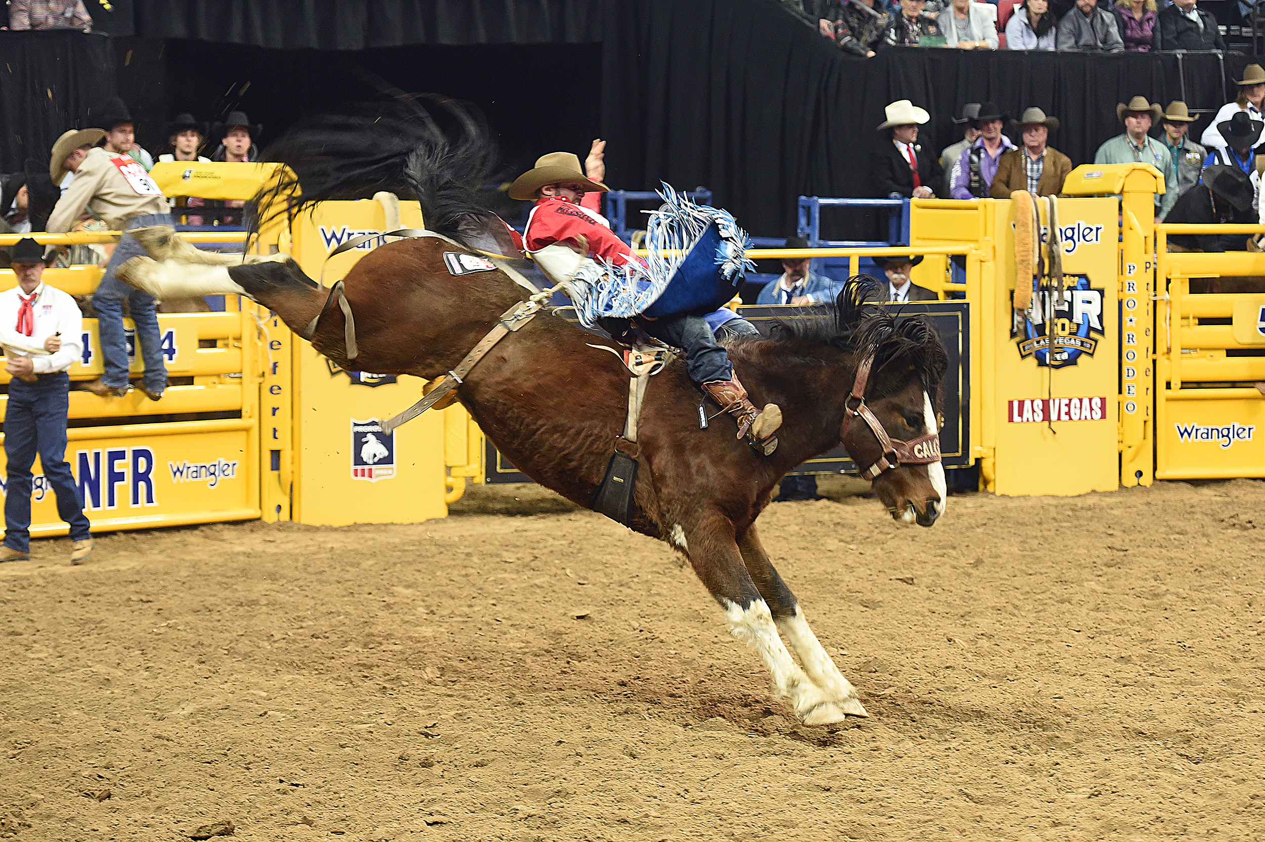 After just missing the National Finals Rodeo by finishing 16th in 2019, Mason Clements will return to the NFR for the third time in his career. (PHOTO BY ROBBY FREEMAN)