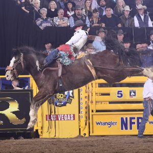 Bareback rider Tim O'Connell rides J Bar J's All Pink on Saturday for 87 points to close out his third straight world championship on the final night of the National Finals Rodeo. (PRCA PRORODEO PHOTO BY JAMES PHIFER)