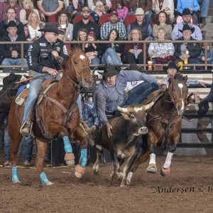 With Matt Reeves hazing, Jacob Edler transitions to his steer Saturday evening en route to a 4.2-second run at the San Angelo Stock Show and Rodeo. He is placing in both rounds, and his two-run cumulative time of 9.2 seconds leads the average. (PHOTO BY RICK ANDERSEN)