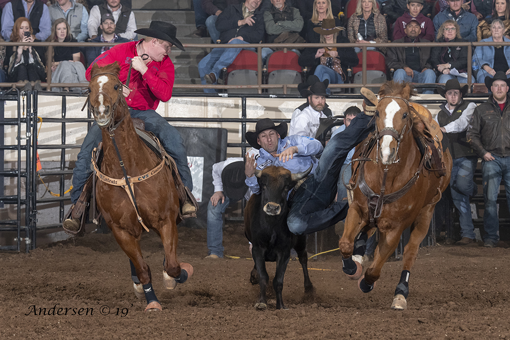 Scott Guenthner transitions to his steer Saturday during the San Angelo Stock Show and Rodeo. Guenther, a two-time National Finals Rodeo qualifier from Provost, Alberta, leads the average with a two-run cumulative time of 8.2 seconds. (PHOTO BY RIC ANDERSEN)