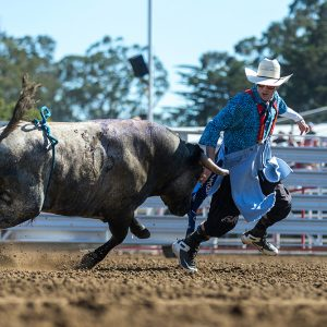 Nathan Harp has won the Bullfighters Only Wrangler Bullfight Tour stop at California Rodeo Salinas twice, picking up his second victory this last week. (PHOTO BY TODD BREWER)