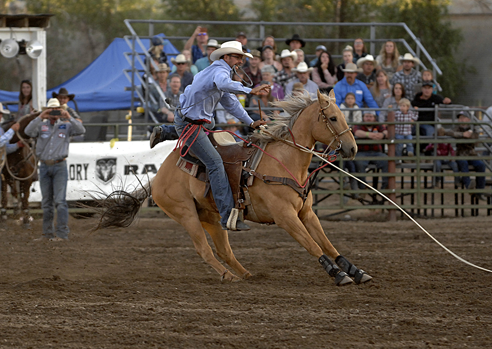 Blaine Konkel steps off his horse to finish his fifth-place run Saturday night at the Cattlemen's Days PRCA Rodeo in Gunnison, Colorado. (PHOTO BY ROBBY FREEMAN)