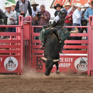 Trey Benton rides Frontier Rodeo's Black Ice for 86.5 points to win the Xtreme Bulls title at Dodge City Roundup Rodeo on Tuesday. (PHOTO BY DAVID SEYMORE)