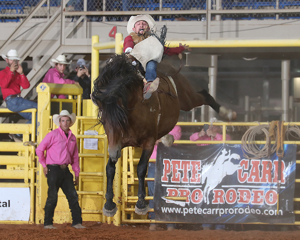 Garrett Shadbolt rides Pete Carr Pro Rodeo's Scarlet's Web for 86 points on Thursday night to take the bareback riding lead at the Lea County Fair and Rodeo. (PHOTO BY PEGGY GANDER)