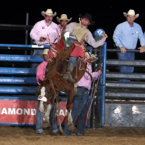 Bareback rider Tim Murphy is one of nine reigning champions at the Austin County Fair's Rodeo, which takes place Oct. 10-12 in Bellville, Texas. (PHOTO BY PEGGY GANDER)