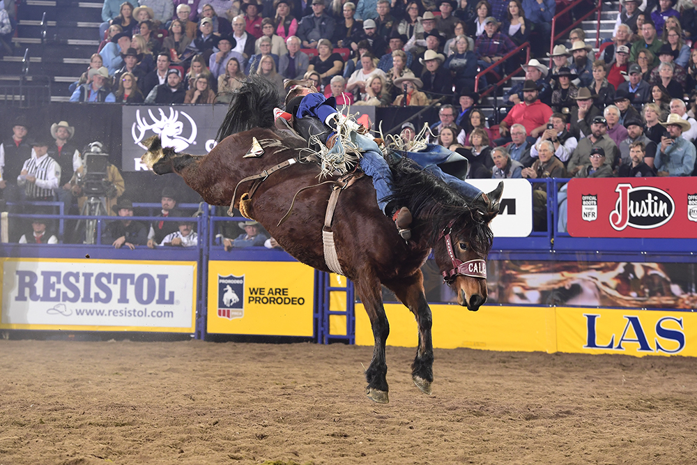 Orin Larsen rides Calgary Stampede's Arbitrator Joe for 87.5 points to place for the fourth time at the National Finals Rodeo. (PRCA PHOTO BY JAMES PHIFER)