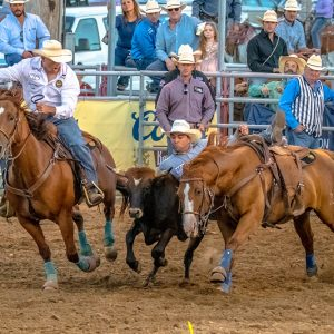 Kodie Jang transitions to his steer during Friday's performance of the Dodge City Roundup Rodeo. He posted a 3.8-second run and has virtually assured a spot in Sunday's championship round. (PHOTO BY JAMES CLAASSEN)