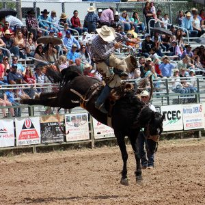 Frontier Rodeo's Wild Bill throws off Oklahoma Panhandle State cowboy Cooper Thatcher during last year's Guymon Pioneer Days Rodeo. Frontier has been recognized for having many of the best animals in ProRodeo.