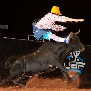 Justin Josey has a bull pass under him during a recent Ultimate Bullfighters competition. Josey, the No. 2 man in the UBF, will be part of the Ultimate Bullfighters Challenge presented by Pump & Pantry, which takes place at 8 p.m. Friday and Saturday. (PHOTO BY CLICK THOMPSON)