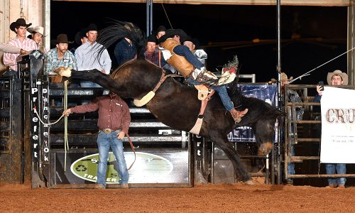 Garrett Shadboldt rides New Frontier Rodeo's Brown Eyed Girl for 83 points Friday night to win the first round of the Chisholm Trail RAM Prairie Circuit Finals Rodeo. He moved into the lead in the circuit standings with the win. (PHOTO BY DALE HIRSCHMAN)