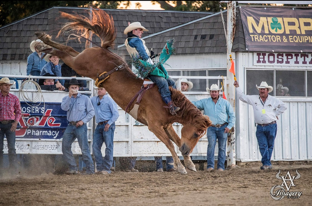 In just his second season as a card-carrying bareback rider in ProRodeo, Jesse Pope has qualified for the National Finals Rodeo and will battle for the gold buckle during the finale in Arlington, Texas. (PHOTO BY PHILLIP KITTS)